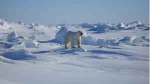 Paisaje ártico