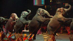 Elefantes circo