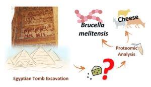 La sustancia blanquecina encontrada en un la tumba de Ptahmes, del siglo XIII a. C., ha resultado ser queso contaminado con la bacteria de la brucelosis