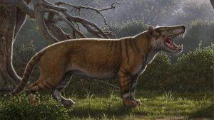 Reconstrucción artística de Simbakubwa kutokaafrika, un carnívoro gigante conocido por la mayor parte de su mandíbula, porciones de su cráneo y partes de su esqueleto