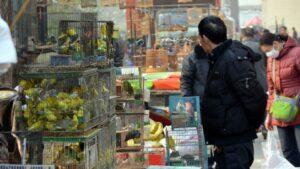Mercado de aves