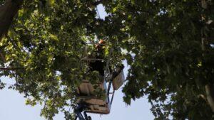 mantenimiento arboles madrid ramas