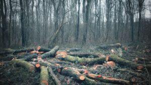 Deforestación de los bosques