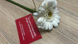 Flor entregada a los diputados a la entrada del Congreso