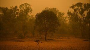 Un canguro atraviesa una región afectada por los incendios cerca de Canberra, Australia