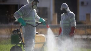 Labores de fumigación en Coria