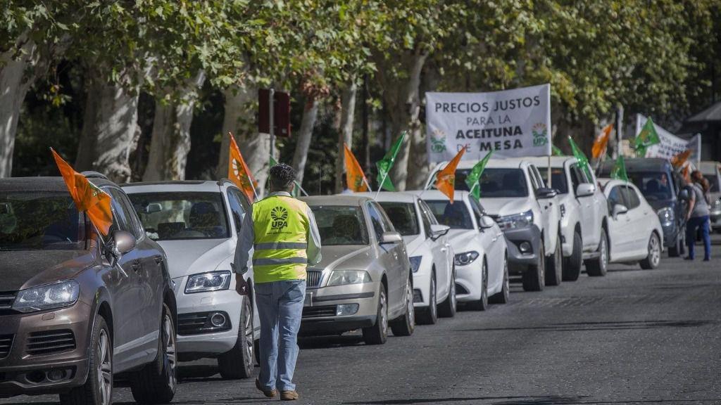 Manifestación UPA Andalucía de los agricultores ante los bajos precios de la aceituna de mesa ante el Palacio de San Telmo.