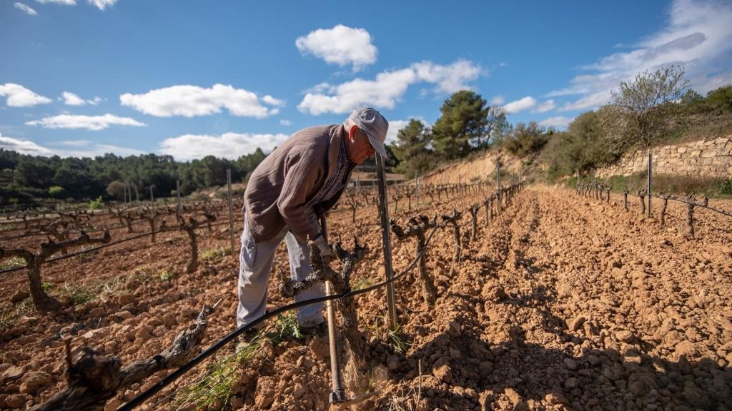 Agricultor en viñedo