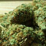 Unidas Podemos anuncia una ley para despenalizar el uso del cannabis y confía en que se apruebe