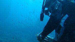 Buceador submarinista submarinismo especies UICN agua mar mediterráneo