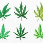 Growbarato, la revolución del sector del cannabis