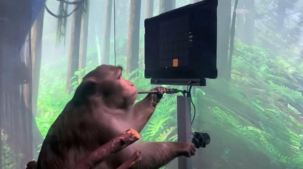 Macaco jugando al Pong con su mente - NEURALINK