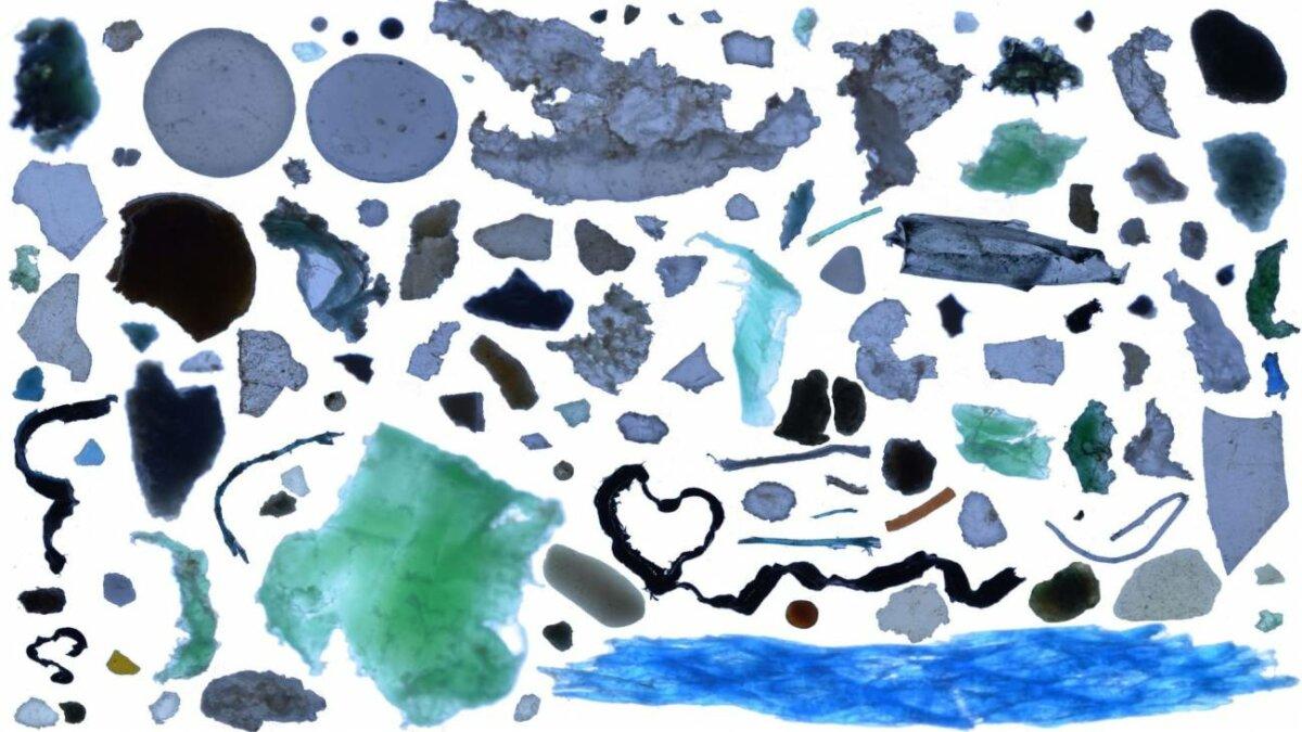 Microplásticos. / UCA