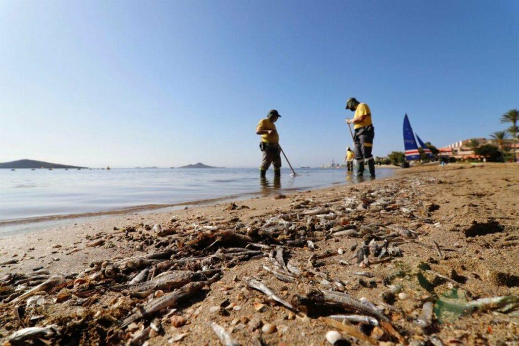 Operarios retiran del mar los peces muertos que han aparecido por quinto día consecutivo este viernes en las playas del Mar Menor en Murcia /© Juan Carlos Caval (EFE)