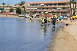 Peces muertos en el Mar Menor, labores de limpieza - AYUNTAMIENTO CARTAGENA