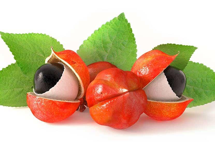 El extracto de guaraná es rico en cafeína